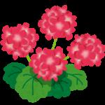 herb_geranium